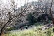 Đẹp Mê Hồn Sắc Xuân Trên Khắp Nẻo Vùng Cao Tây Bắc