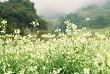 Lên Mộc Châu ngắm hoa Cải Trắng cần mang theo những gì