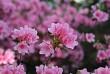 Ngẩn ngơ trước vẻ đẹp của những loài hoa của núi rừng Tây Bắc