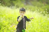 Hoa cải trắng đầu mùa có gì nổi bật
