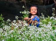 Sắc màu Mộc Châu mùa hoa cải trắng