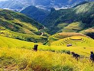 Du Lịch Sapa: Hà Nội - Sapa – Hàm Rổng – Cát Cát – Lào Cai – Hà Nội