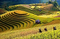Du Lịch Tây Bắc 3 Ngày: Hà Nội – Yên Bái – Thác Bà – Mù Cang Chải