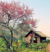 Tour Du Lịch Tây Bắc 5 Ngày 4 Đêm: Hà Nội -  Mai Châu – Sơn La – Điện Biên – Sapa (đi xe,về tàu)