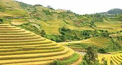 Du Lịch Tây Bắc 4 Ngày: Hà Nội – Sơn La – Điện Biên