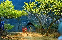 Tour du lịch Hà Nội - Mai Châu - Mộc Châu - Mùa quả chín 2 Ngày 1 Đêm