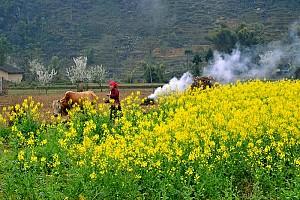 Du Lịch Hà Giang Ghép Đoàn: Hà Giang – Đồng Văn – Lũng Cú – Mèo Vạc – Tuyên Quang