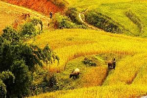 """Lào Cai: """"điểm đến đẹp nhất trên thới giới""""."""