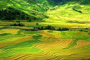 """""""Thiên đường hạ giới"""" của những bức tranh lúa chín vàng mùa thu ở Tây Bắc."""