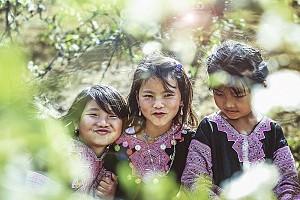 Tour du lịch Hà Nội - Mai Châu - Mộc Châu - Mùa Hoa Mận, Hoa Đào - 2 Ngày 1 Đêm